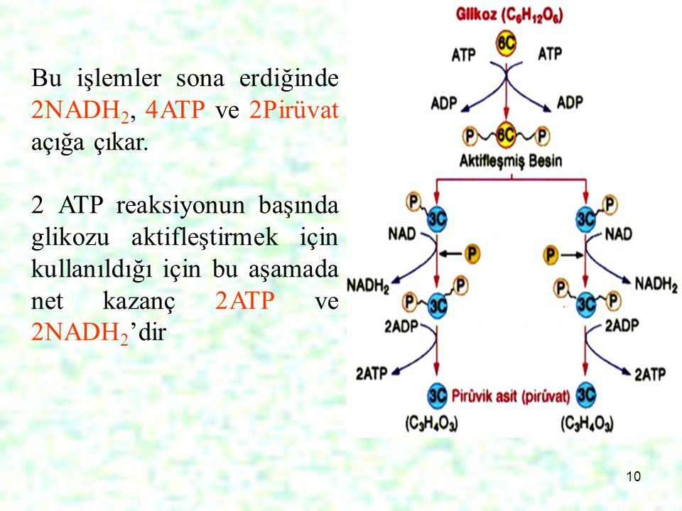 10 Bu işlemler sona erdiğinde 2NADH 2, 4ATP ve 2Pirüvat açığa çıkar. 2 ATP reaksiyonun başında glikozu aktifleştirmek için kullanıldığı için bu aşamad