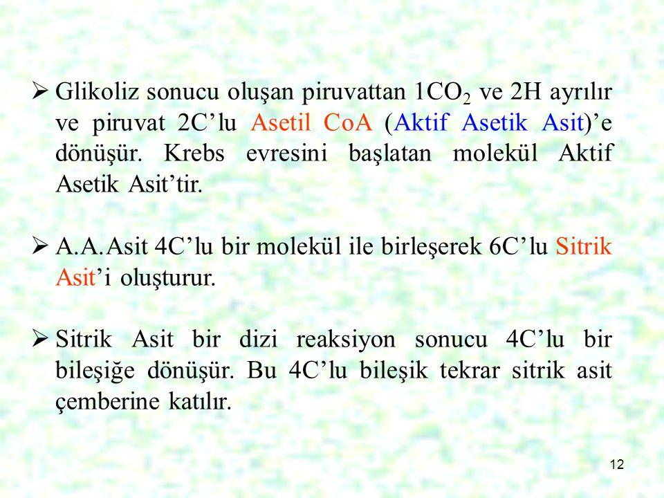 12  Glikoliz sonucu oluşan piruvattan 1CO 2 ve 2H ayrılır ve piruvat 2C'lu Asetil CoA (Aktif Asetik Asit)'e dönüşür. Krebs evresini başlatan molekül