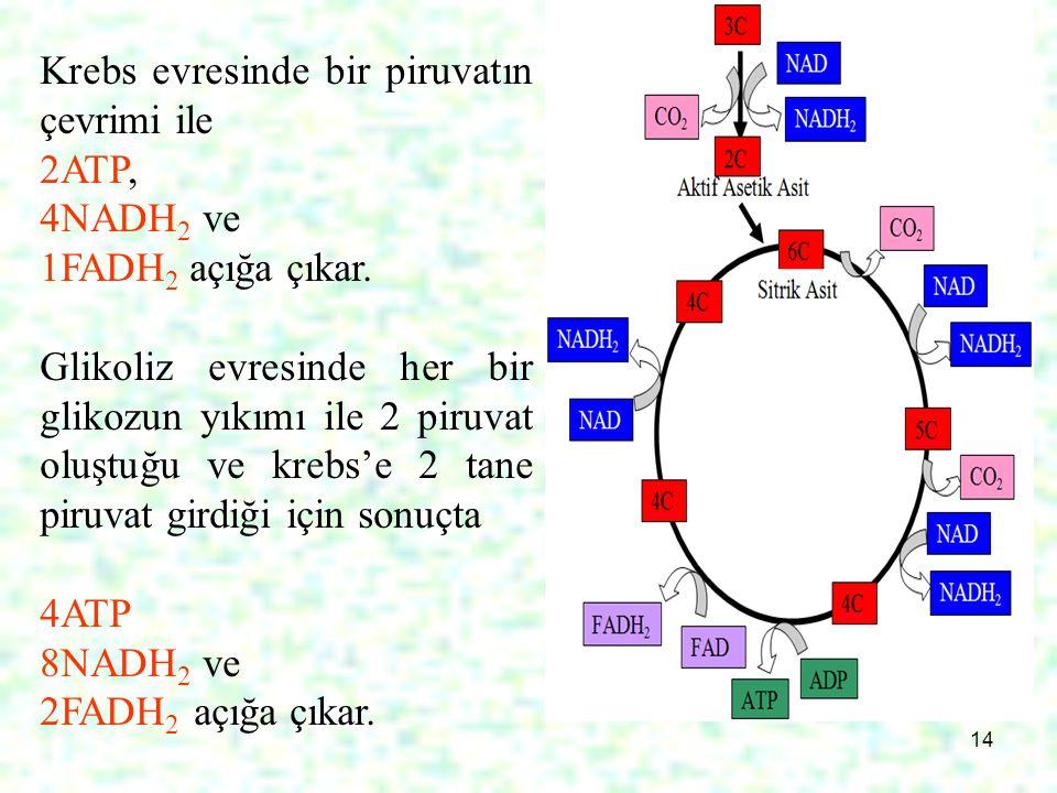 14 Krebs evresinde bir piruvatın çevrimi ile 2ATP, 4NADH 2 ve 1FADH 2 açığa çıkar. Glikoliz evresinde her bir glikozun yıkımı ile 2 piruvat oluştuğu v