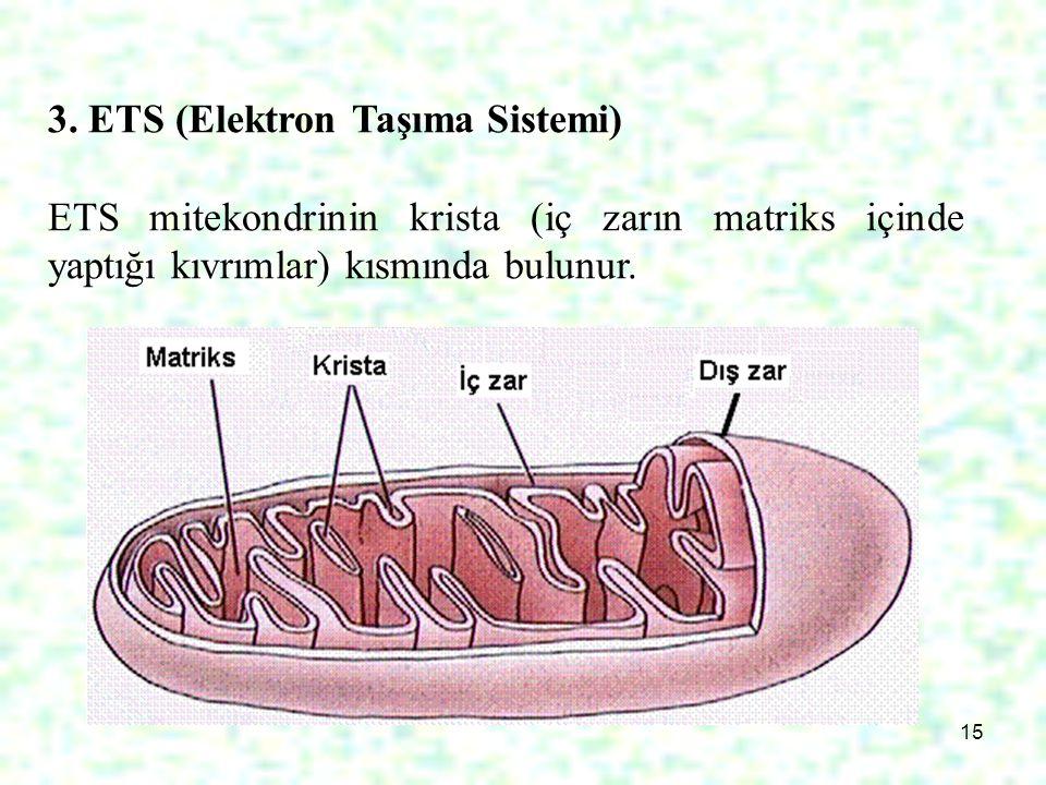 15 3. ETS (Elektron Taşıma Sistemi) ETS mitekondrinin krista (iç zarın matriks içinde yaptığı kıvrımlar) kısmında bulunur.