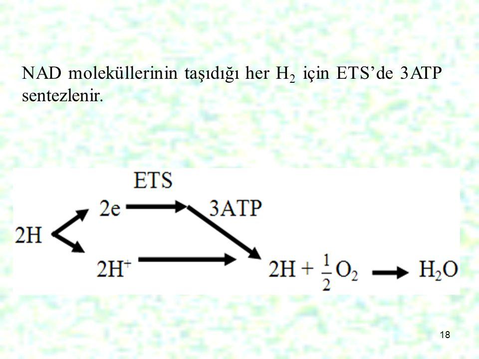 18 NAD moleküllerinin taşıdığı her H 2 için ETS'de 3ATP sentezlenir.