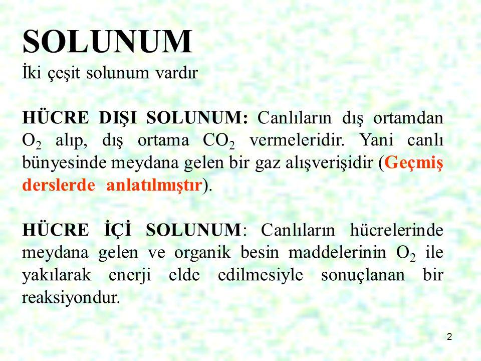 13 Glikoliz 6C