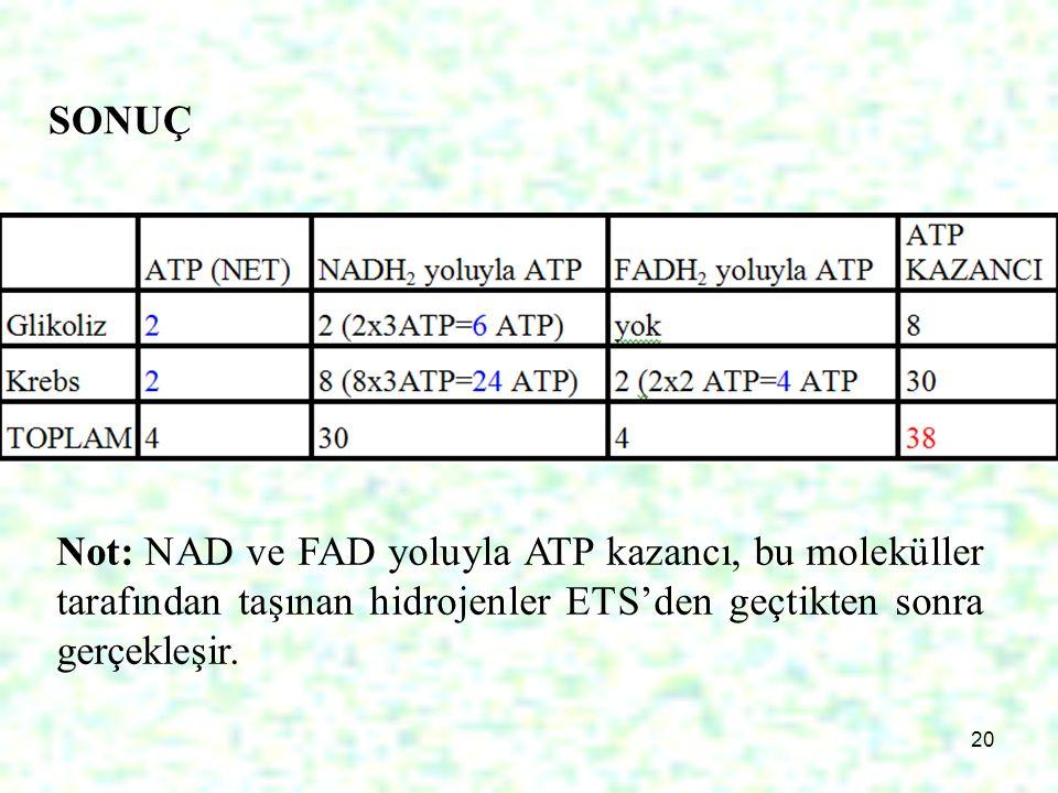 20 SONUÇ Not: NAD ve FAD yoluyla ATP kazancı, bu moleküller tarafından taşınan hidrojenler ETS'den geçtikten sonra gerçekleşir.