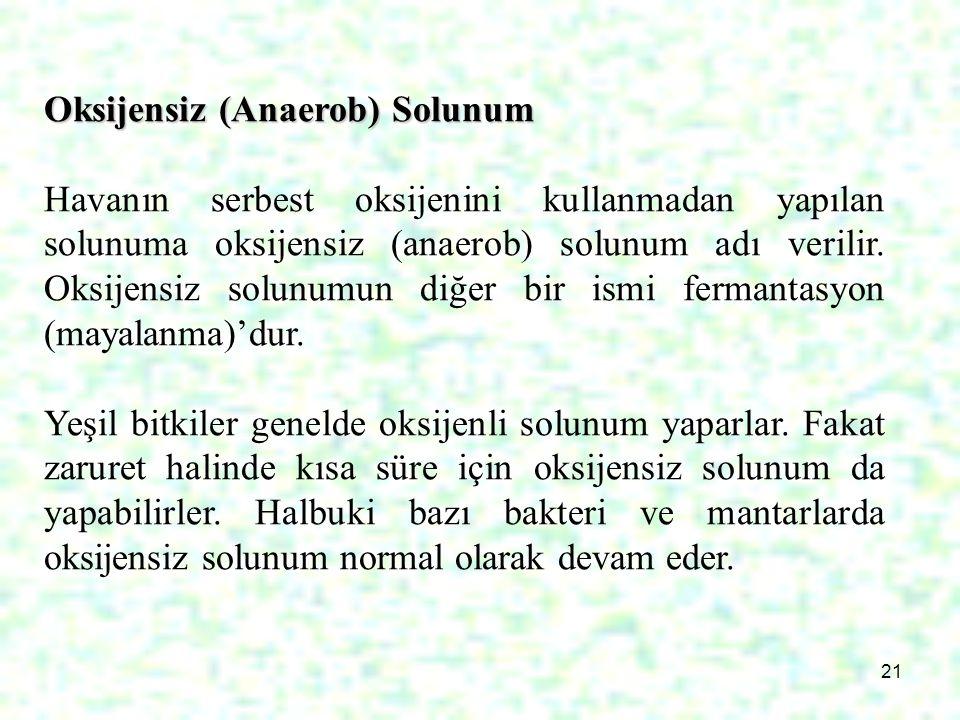 21 Oksijensiz (Anaerob) Solunum Havanın serbest oksijenini kullanmadan yapılan solunuma oksijensiz (anaerob) solunum adı verilir. Oksijensiz solunumun