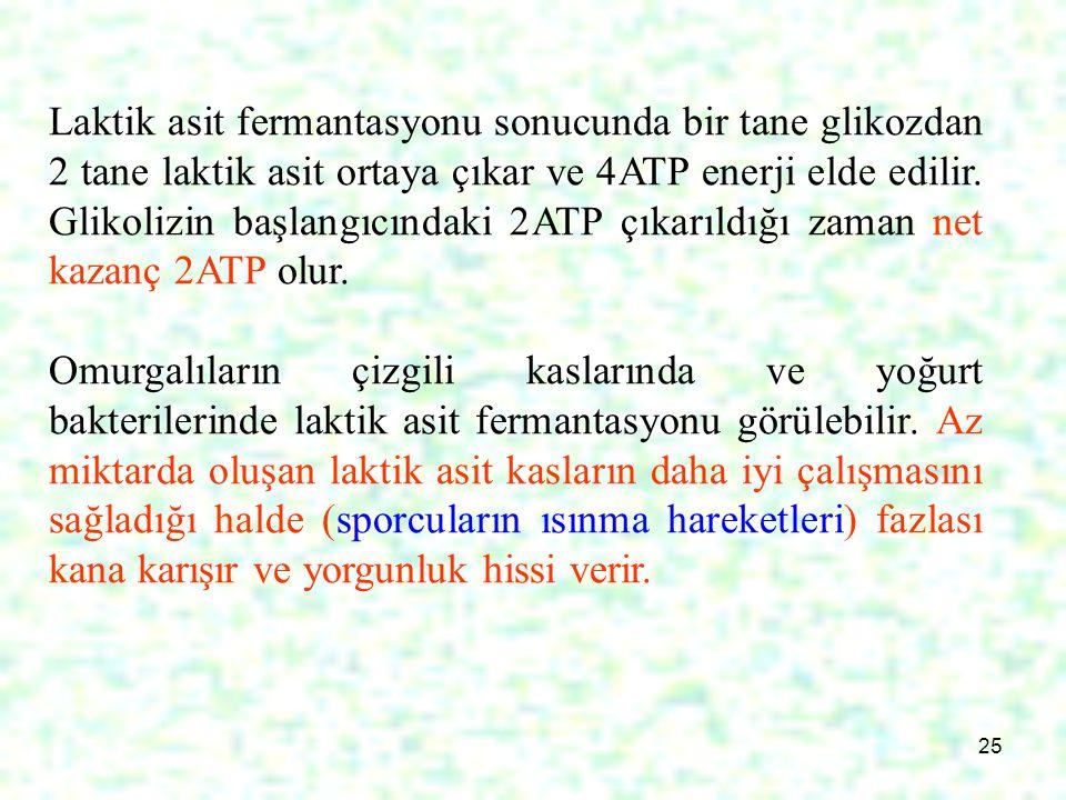 25 Laktik asit fermantasyonu sonucunda bir tane glikozdan 2 tane laktik asit ortaya çıkar ve 4ATP enerji elde edilir. Glikolizin başlangıcındaki 2ATP
