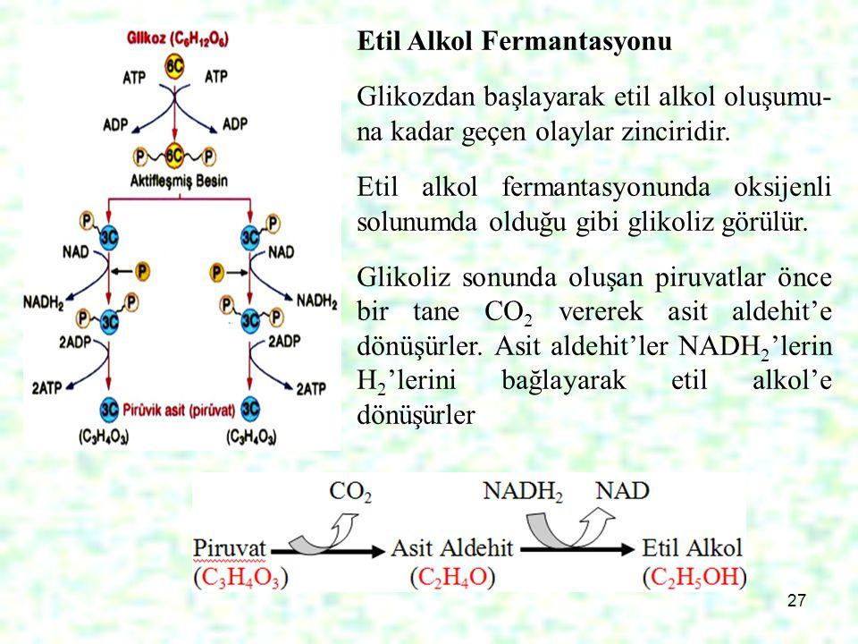 27. Etil Alkol Fermantasyonu Glikozdan başlayarak etil alkol oluşumu- na kadar geçen olaylar zinciridir. Etil alkol fermantasyonunda oksijenli solunum