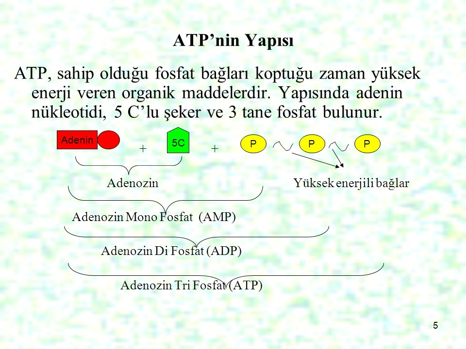 5 ATP'nin Yapısı ATP, sahip olduğu fosfat bağları koptuğu zaman yüksek enerji veren organik maddelerdir. Yapısında adenin nükleotidi, 5 C'lu şeker ve