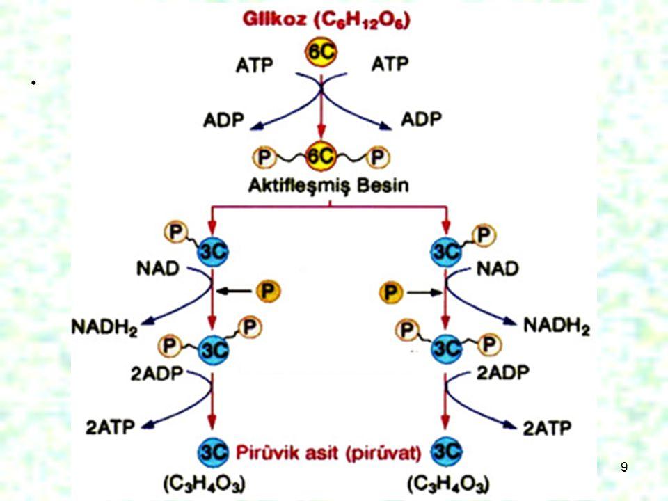 10 Bu işlemler sona erdiğinde 2NADH 2, 4ATP ve 2Pirüvat açığa çıkar.