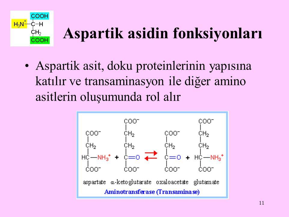 11 Aspartik asidin fonksiyonları Aspartik asit, doku proteinlerinin yapısına katılır ve transaminasyon ile diğer amino asitlerin oluşumunda rol alır