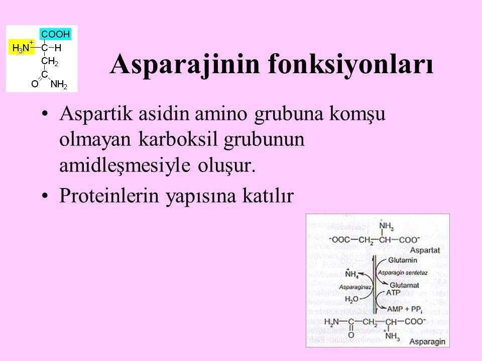 14 Asparajinin fonksiyonları Aspartik asidin amino grubuna komşu olmayan karboksil grubunun amidleşmesiyle oluşur. Proteinlerin yapısına katılır