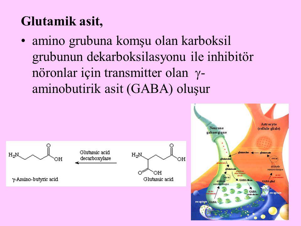17 Glutamik asit, amino grubuna komşu olan karboksil grubunun dekarboksilasyonu ile inhibitör nöronlar için transmitter olan  - aminobutirik asit (GA