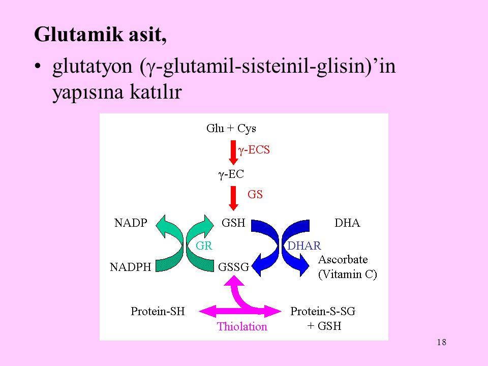 18 Glutamik asit, glutatyon (  -glutamil-sisteinil-glisin)'in yapısına katılır