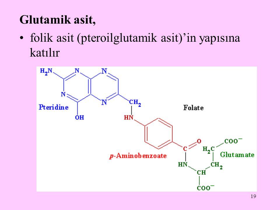 19 Glutamik asit, folik asit (pteroilglutamik asit)'in yapısına katılır