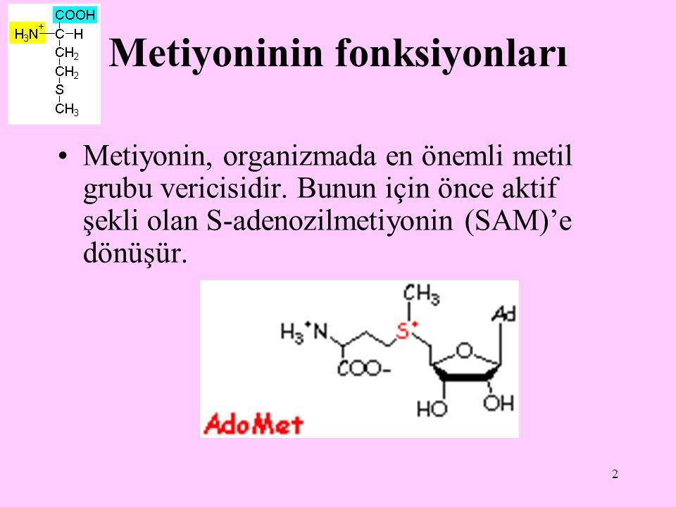 2 Metiyoninin fonksiyonları Metiyonin, organizmada en önemli metil grubu vericisidir. Bunun için önce aktif şekli olan S-adenozilmetiyonin (SAM)'e dön