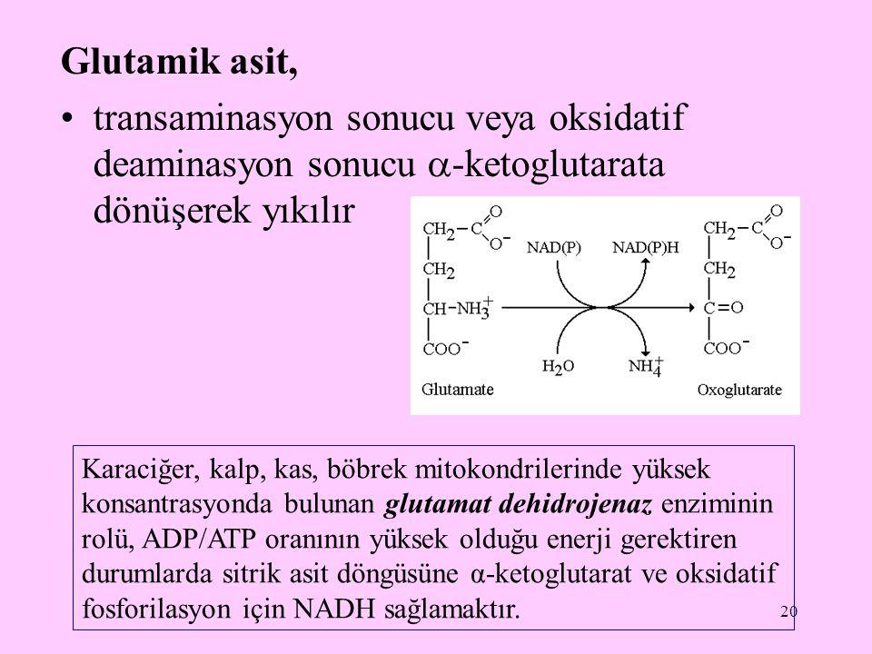 20 Glutamik asit, transaminasyon sonucu veya oksidatif deaminasyon sonucu  -ketoglutarata dönüşerek yıkılır Karaciğer, kalp, kas, böbrek mitokondrile