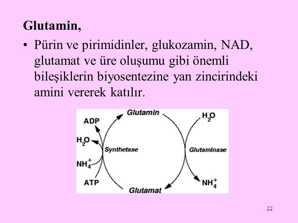 22 Glutamin, Pürin ve pirimidinler, glukozamin, NAD, glutamat ve üre oluşumu gibi önemli bileşiklerin biyosentezine yan zincirindeki amini vererek kat