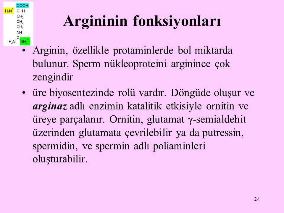 24 Argininin fonksiyonları Arginin, özellikle protaminlerde bol miktarda bulunur. Sperm nükleoproteini arginince çok zengindir üre biyosentezinde rolü