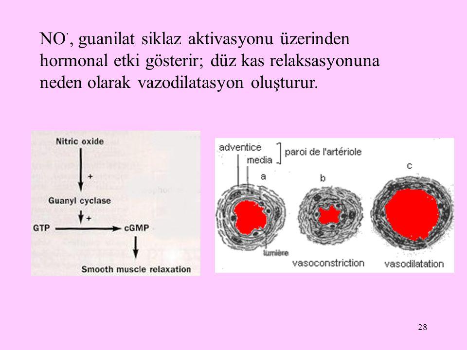 28 NO ·, guanilat siklaz aktivasyonu üzerinden hormonal etki gösterir; düz kas relaksasyonuna neden olarak vazodilatasyon oluşturur.