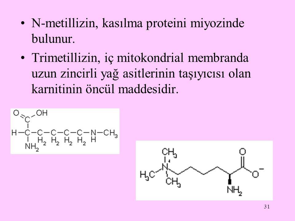 31 N-metillizin, kasılma proteini miyozinde bulunur. Trimetillizin, iç mitokondrial membranda uzun zincirli yağ asitlerinin taşıyıcısı olan karnitinin