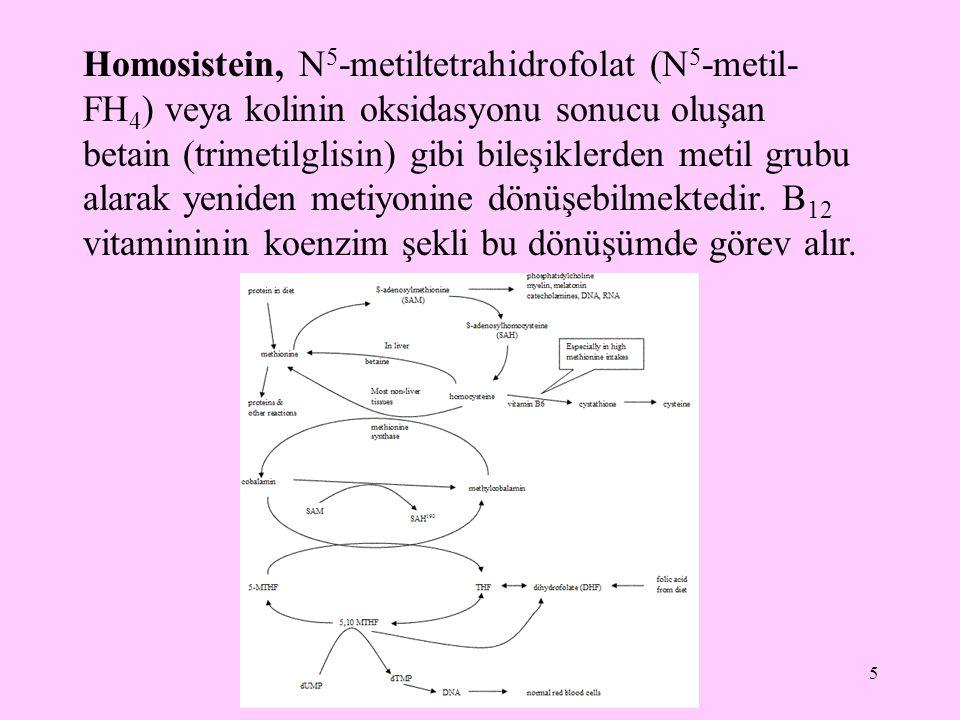 6 Metiyonin, Sistein oluşumunda sülfhidril grubu sağlayıcısıdır.