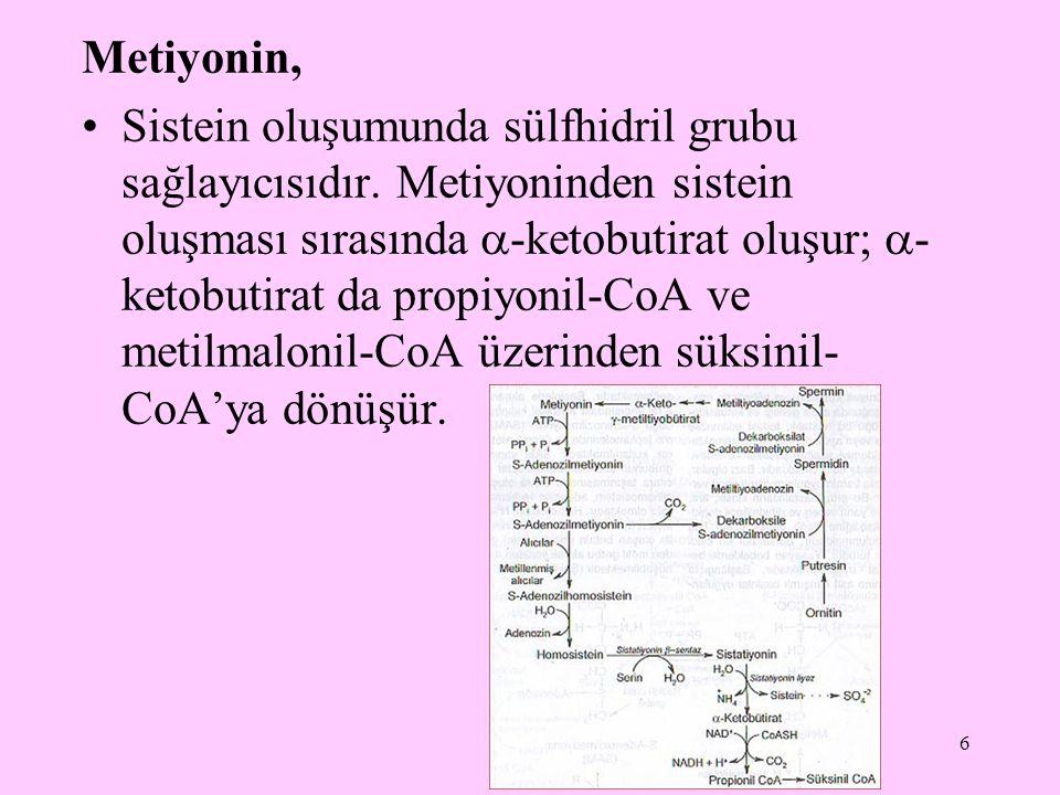 6 Metiyonin, Sistein oluşumunda sülfhidril grubu sağlayıcısıdır. Metiyoninden sistein oluşması sırasında  -ketobutirat oluşur;  - ketobutirat da pro