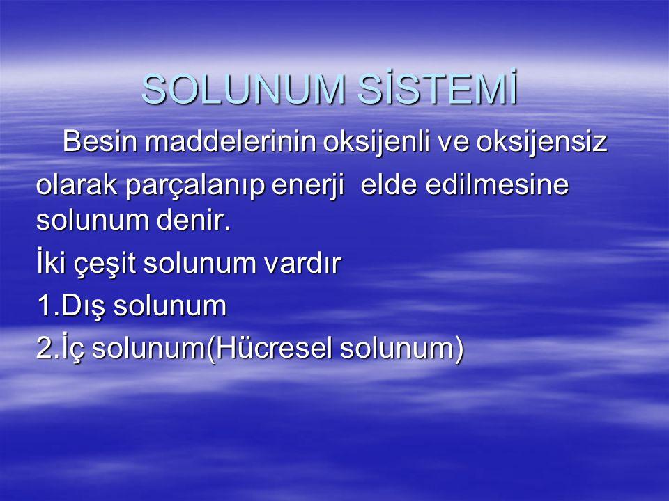  Solunum organlarında oksijenin dışarıdan alınması,karbondioksitin dışarı atılması olayına dış solunum denir  Hücrede besin oksijen ile yakılarak enerji üretilmesine hücresel solunum yani iç solunum denir.