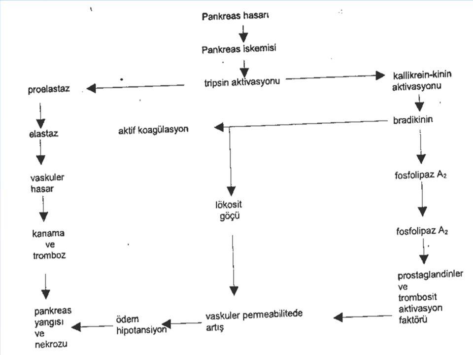 Iskemi, Ödematöz pankreatitisin akut hemorajik pankreatitise dönüşümünde rol oynar.