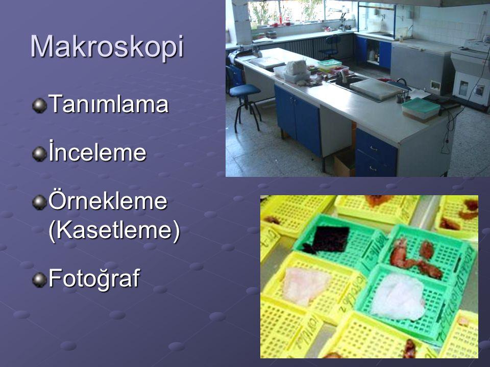 Makroskopi Tanımlamaİnceleme Örnekleme (Kasetleme) Fotoğraf