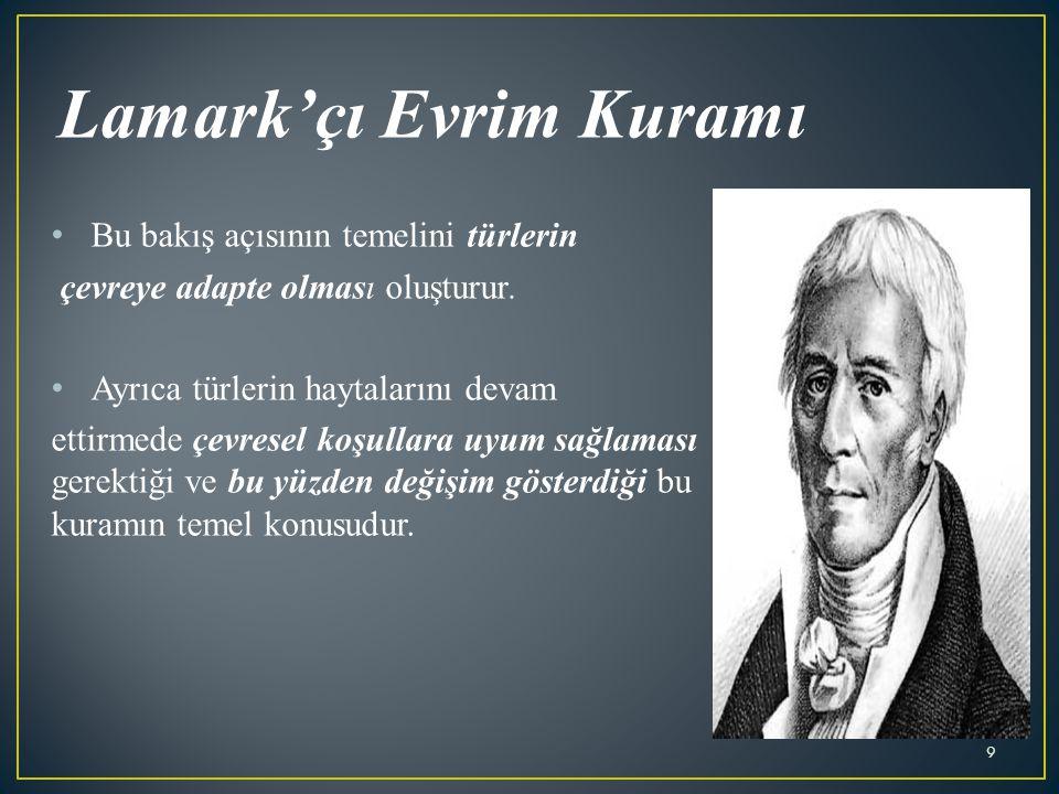 Lamark'çı Evrim Kuramı Bu bakış açısının temelini türlerin çevreye adapte olması oluşturur.