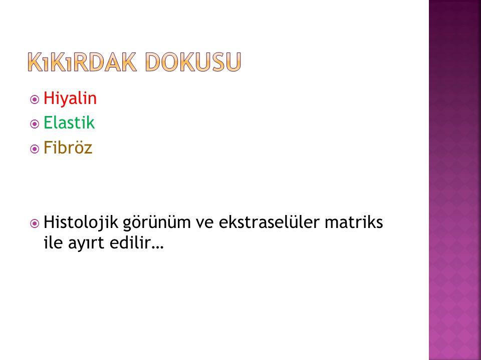 Hiyalin  Elastik  Fibröz  Histolojik görünüm ve ekstraselüler matriks ile ayırt edilir…
