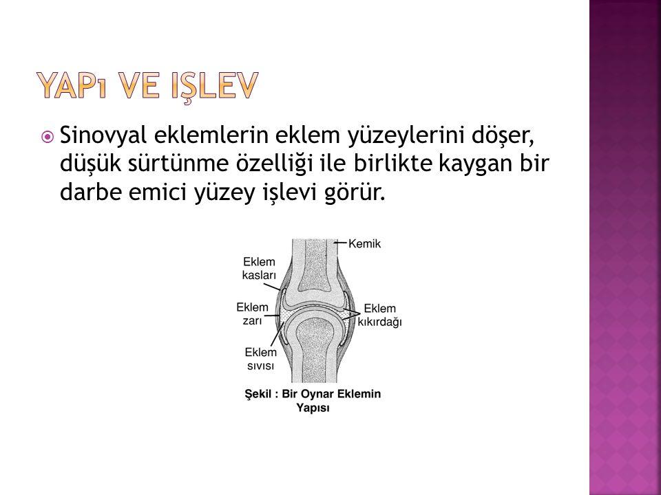  Sinovyal eklemlerin eklem yüzeylerini döşer, düşük sürtünme özelliği ile birlikte kaygan bir darbe emici yüzey işlevi görür.