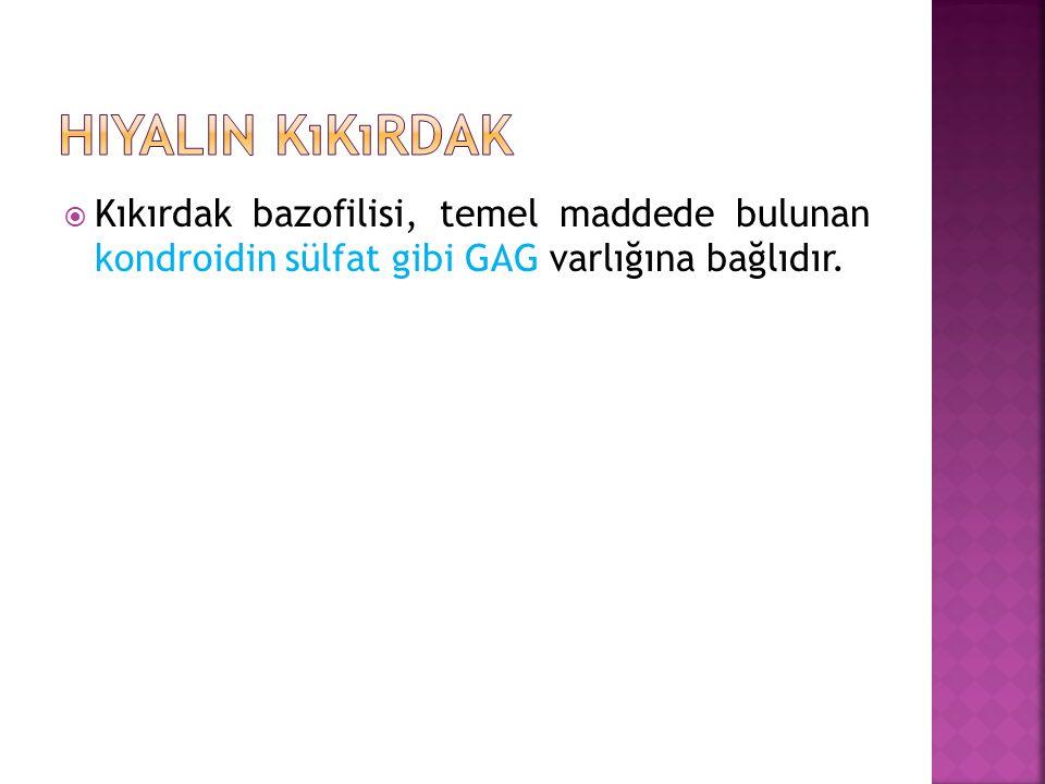  Kıkırdak bazofilisi, temel maddede bulunan kondroidin sülfat gibi GAG varlığına bağlıdır.