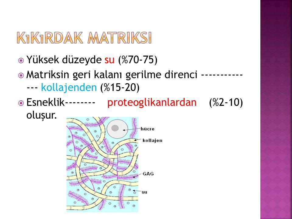  Yüksek düzeyde su (%70-75)  Matriksin geri kalanı gerilme direnci ----------- --- kollajenden (%15-20)  Esneklik-------- proteoglikanlardan (%2-10