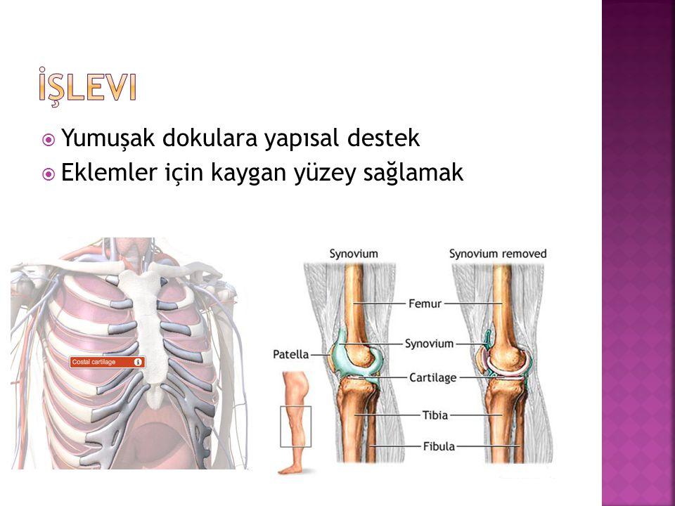  Matriks kuru ağırlığının %40-70'i kollajen  Hiyalin kıkırdak kollajenlerinin %90-95'ini kıkırdağa gerilme kuvvetini ve biçimini kazandıran tip II kollajendir.