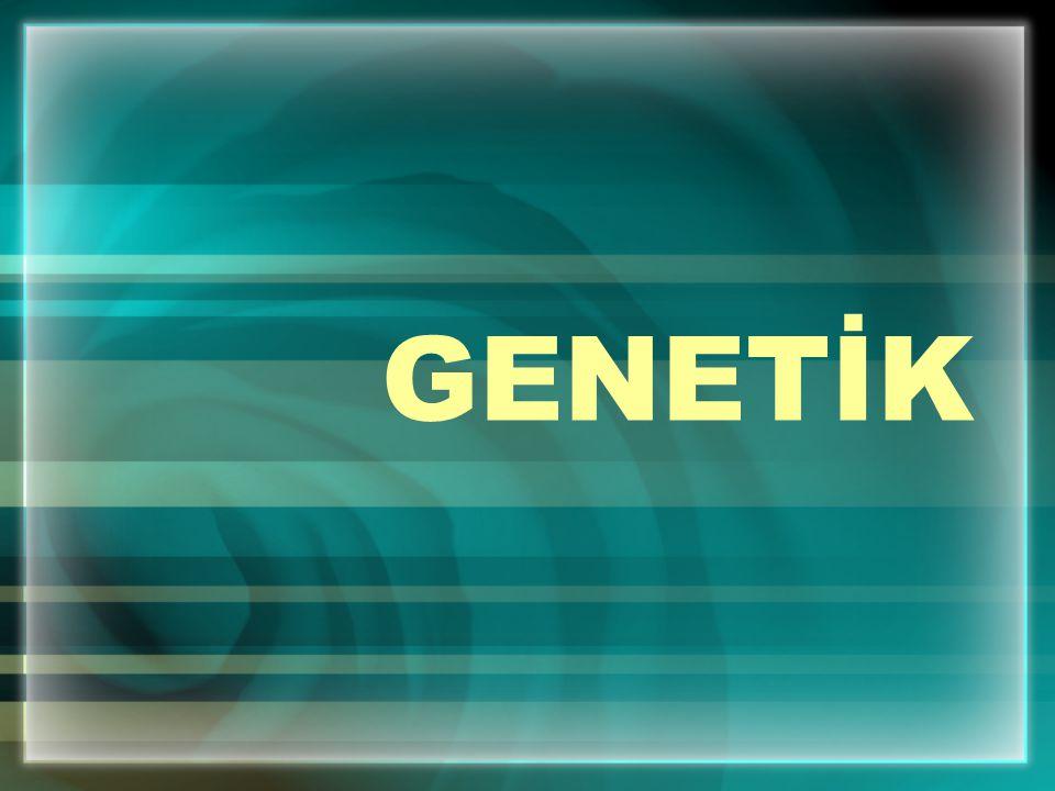 Yukarıdaki çaprazlamada görüldüğü gibi çocukların genotipleri 2 / 4 ( % 50 ) melez ( heterozigot ) kıvırcık saçlı, 2 / 4 ( % 50 ) arı ( homozigot ) düz saçlı olur.