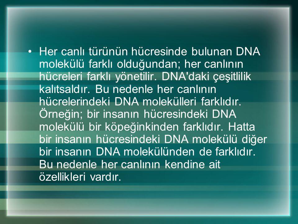 DNA'da bulunan nükleotit zincirlerinden her birinin üzerindeki kalıba göre RNA molekülleri oluşur. Hücrenin hangi tip bir protein gereksinimi varsa o