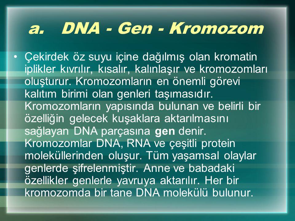 Her canlı türünün hücresinde bulunan DNA molekülü farklı olduğundan; her canlının hücreleri farklı yönetilir. DNA'daki çeşitlilik kalıtsaldır. Bu nede