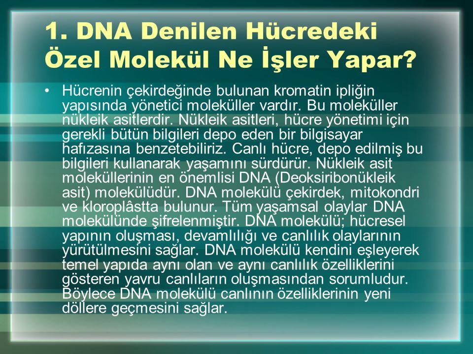 1.DNA Denilen Hücredeki Özel Molekül Ne İşler Yapar.