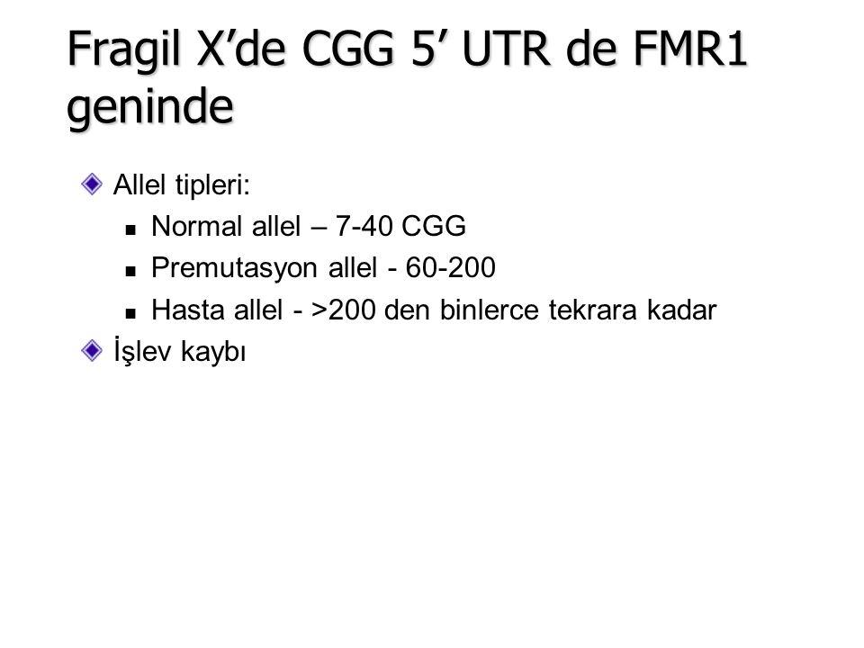 Allel tipleri: Normal allel – 7-40 CGG Premutasyon allel - 60-200 Hasta allel - >200 den binlerce tekrara kadar İşlev kaybı Fragil X'de CGG 5' UTR de