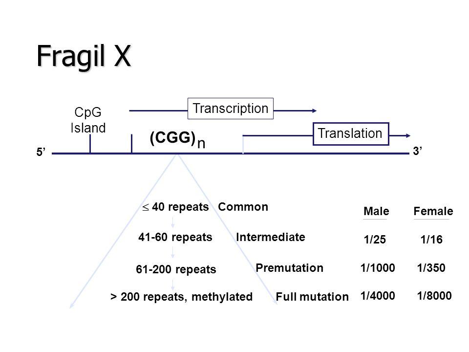 Fragil X Premutation 61-200 repeats > 200 repeats, methylated Common Full mutation 41-60 repeatsIntermediate  40 repeats CpG Island (CGG) n 5' 3' Tra