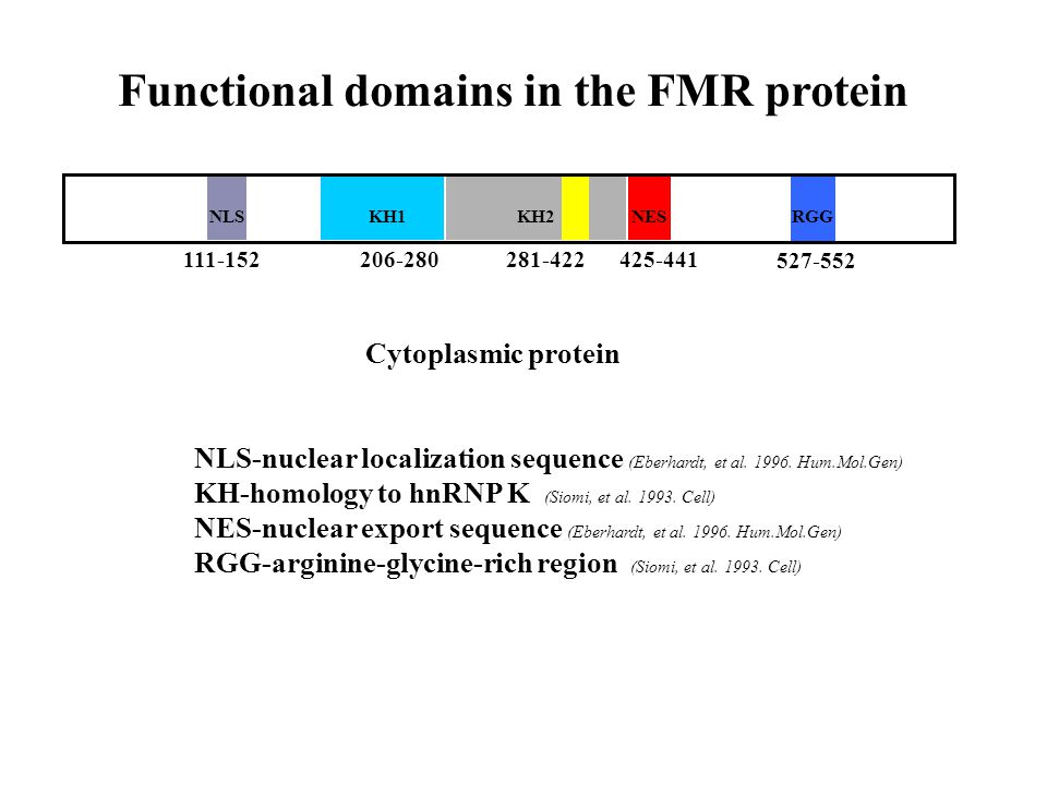 NLSKH1NESRGGKH2 111-152206-280281-422425-441 527-552 Functional domains in the FMR protein NLS-nuclear localization sequence (Eberhardt, et al.