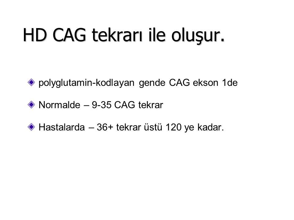 polyglutamin-kodlayan gende CAG ekson 1de Normalde – 9-35 CAG tekrar Hastalarda – 36+ tekrar üstü 120 ye kadar. HD CAG tekrarı ile oluşur.