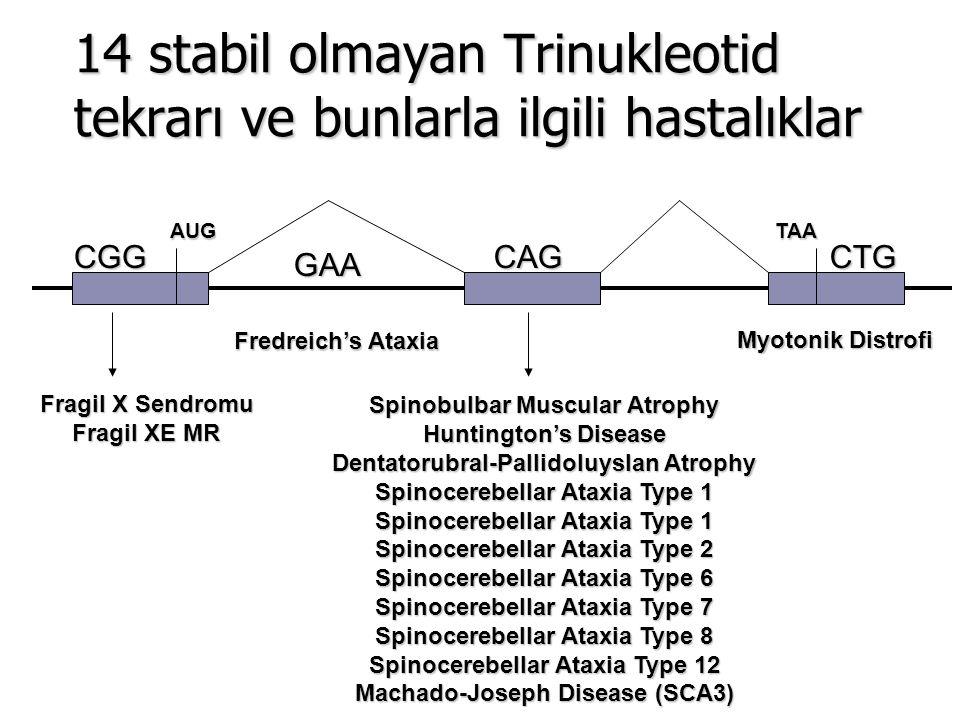 14 stabil olmayan Trinukleotid tekrarı ve bunlarla ilgili hastalıklar AUGTAA CGGGAACAGCTG Fragil X Sendromu Fragil XE MR Fredreich's Ataxia Spinobulba
