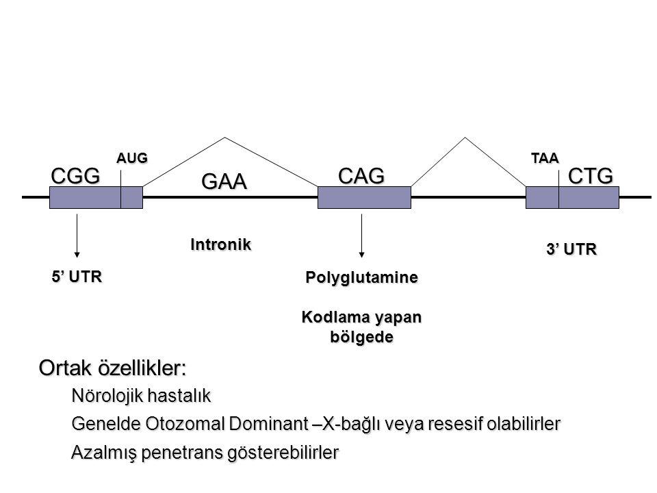 AUGTAA CGG GAA CAGCTG 5' UTR Intronik Polyglutamine Kodlama yapan bölgede 3' UTR Ortak özellikler: Nörolojik hastalık Genelde Otozomal Dominant –X-bağ