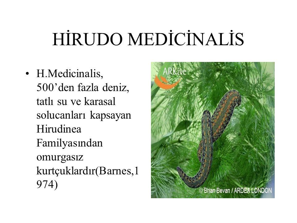 HİRUDO MEDİCİNALİS H.Medicinalis, 500'den fazla deniz, tatlı su ve karasal solucanları kapsayan Hirudinea Familyasından omurgasız kurtçuklardır(Barnes