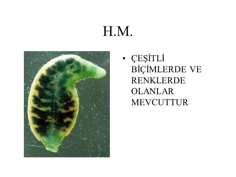 H.M. ÇEŞİTLİ BİÇİMLERDE VE RENKLERDE OLANLAR MEVCUTTUR