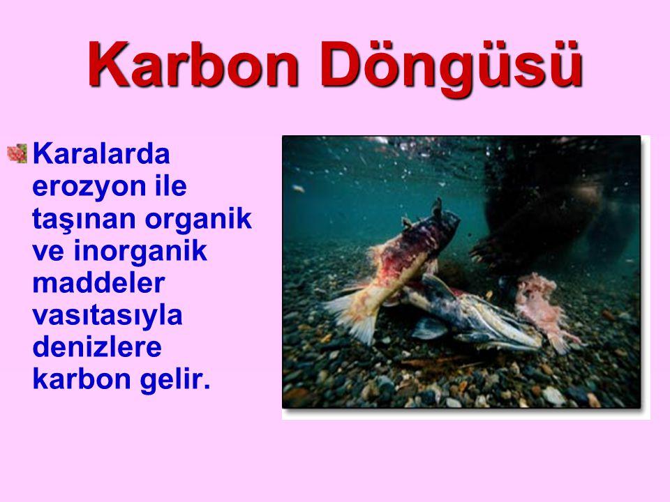 Karbon Döngüsü Karalarda erozyon ile taşınan organik ve inorganik maddeler vasıtasıyla denizlere karbon gelir.