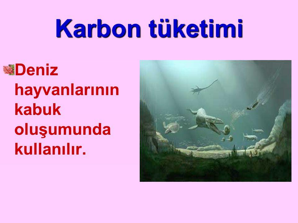 Karbon tüketimi Deniz hayvanlarının kabuk oluşumunda kullanılır.