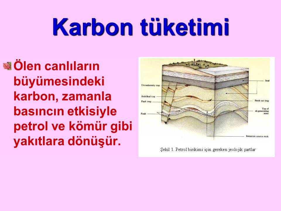 Karbon tüketimi Ölen canlıların büyümesindeki karbon, zamanla basıncın etkisiyle petrol ve kömür gibi yakıtlara dönüşür.