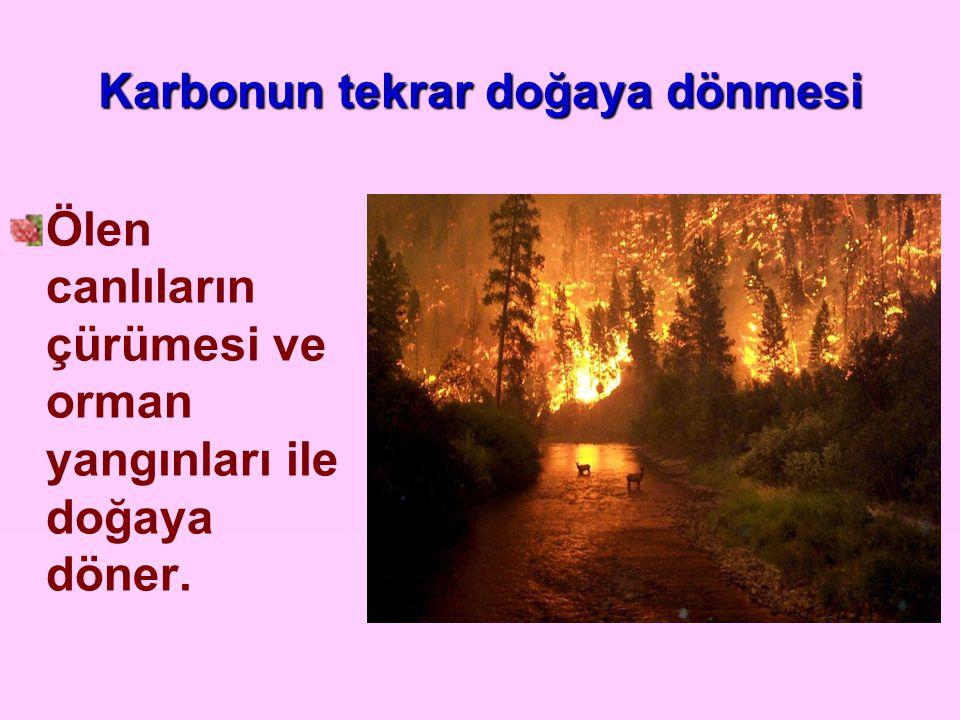 Karbonun tekrar doğaya dönmesi Ölen canlıların çürümesi ve orman yangınları ile doğaya döner.
